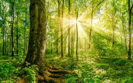 Milchzahndosen aus Holz. Nachhaltig und ökologisch